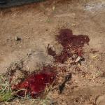 استعراض عسكري تحت النار في ايران، بالصور كيف وقع الهجوم المسلح في الأهواز؟ 11