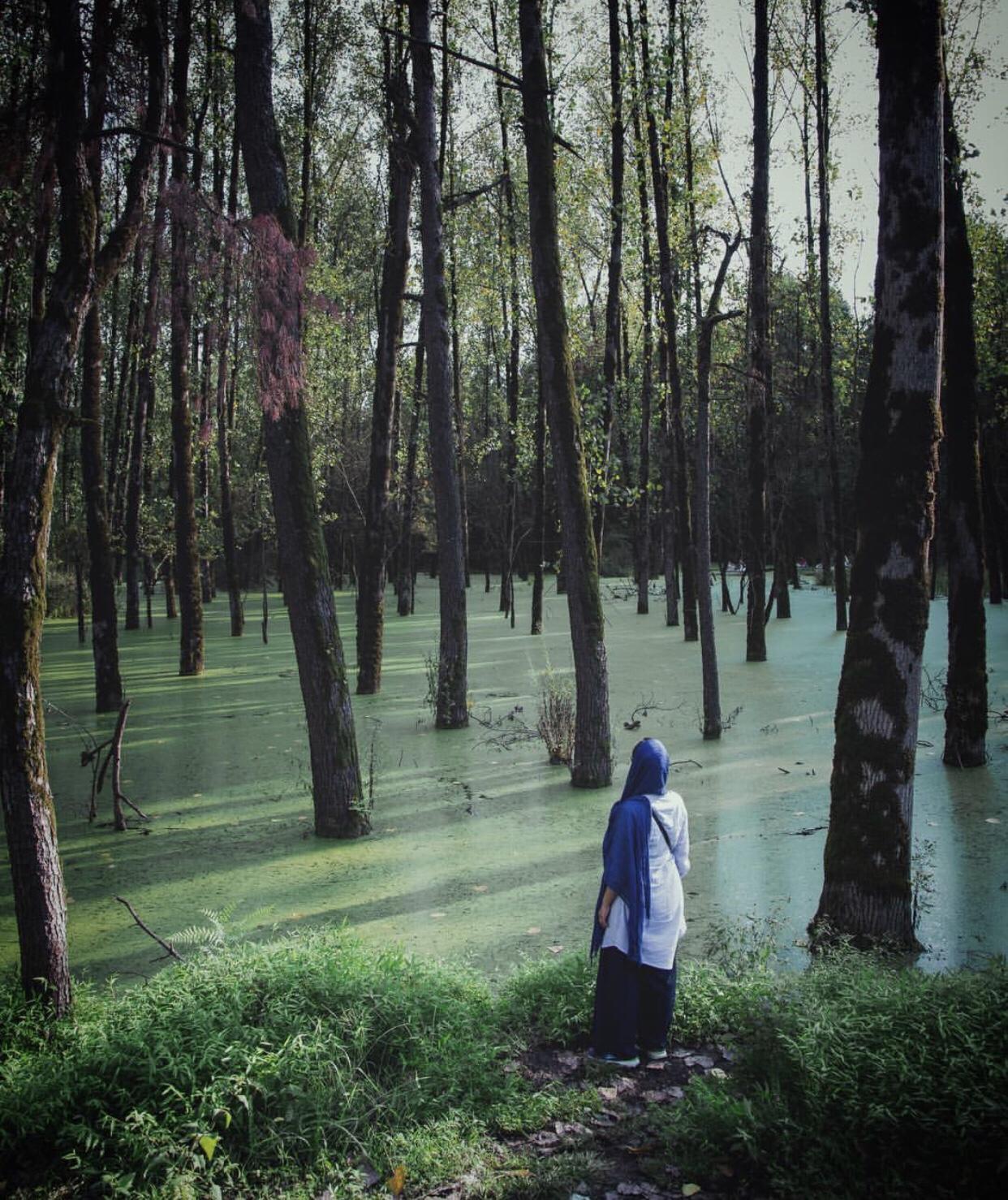 عدسة ايرانية: غابة سروان في گيلان 3