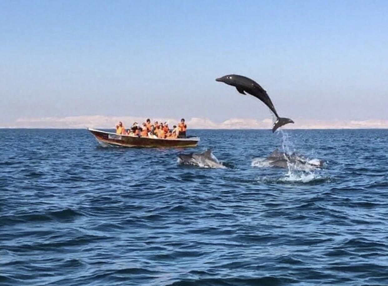 عدسة إيرانية: جزيرة هنگام في قشم في المياه الخليجية 3