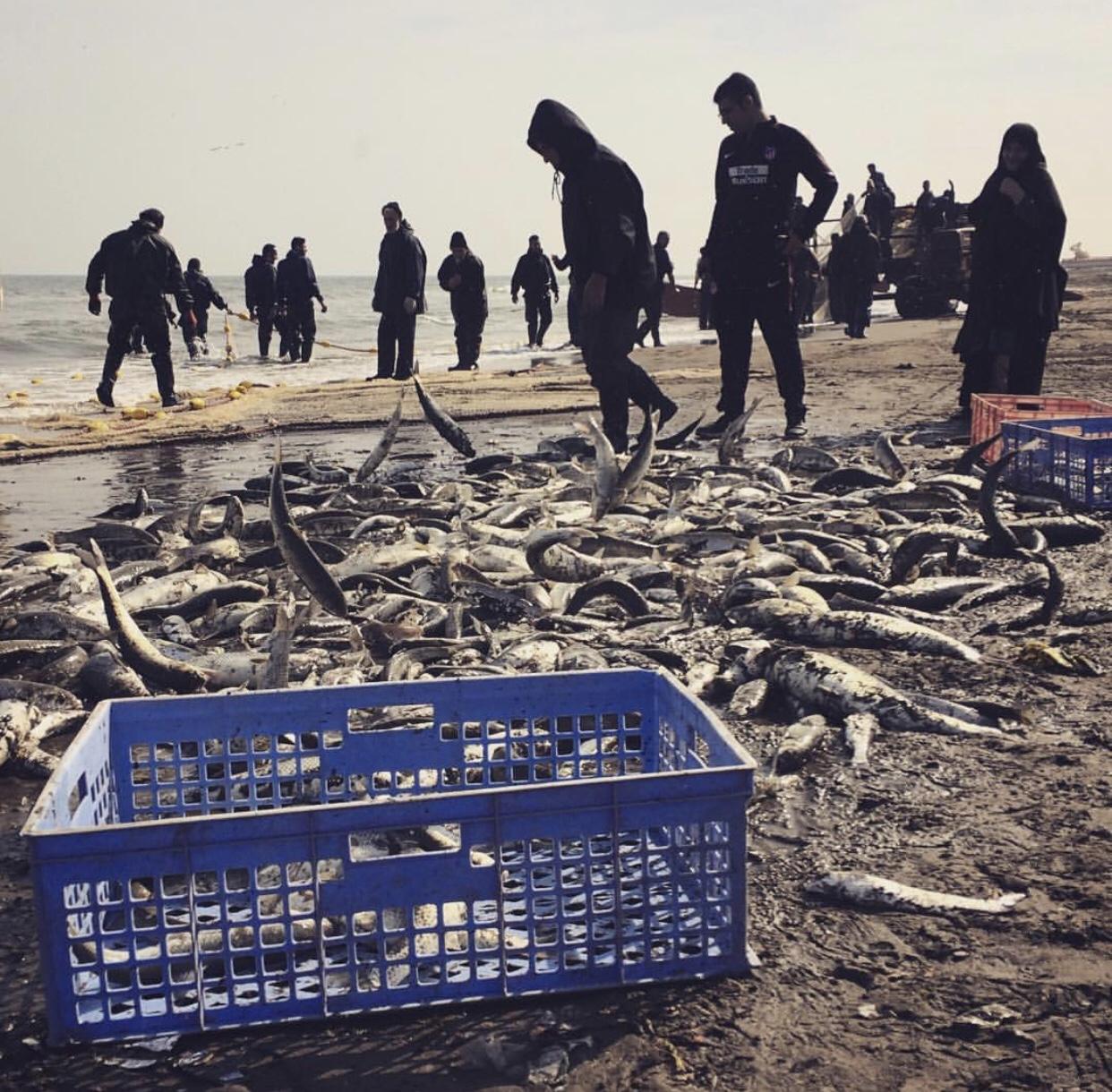 عدسة إيرانية: صيد السمك في أنزلي 1