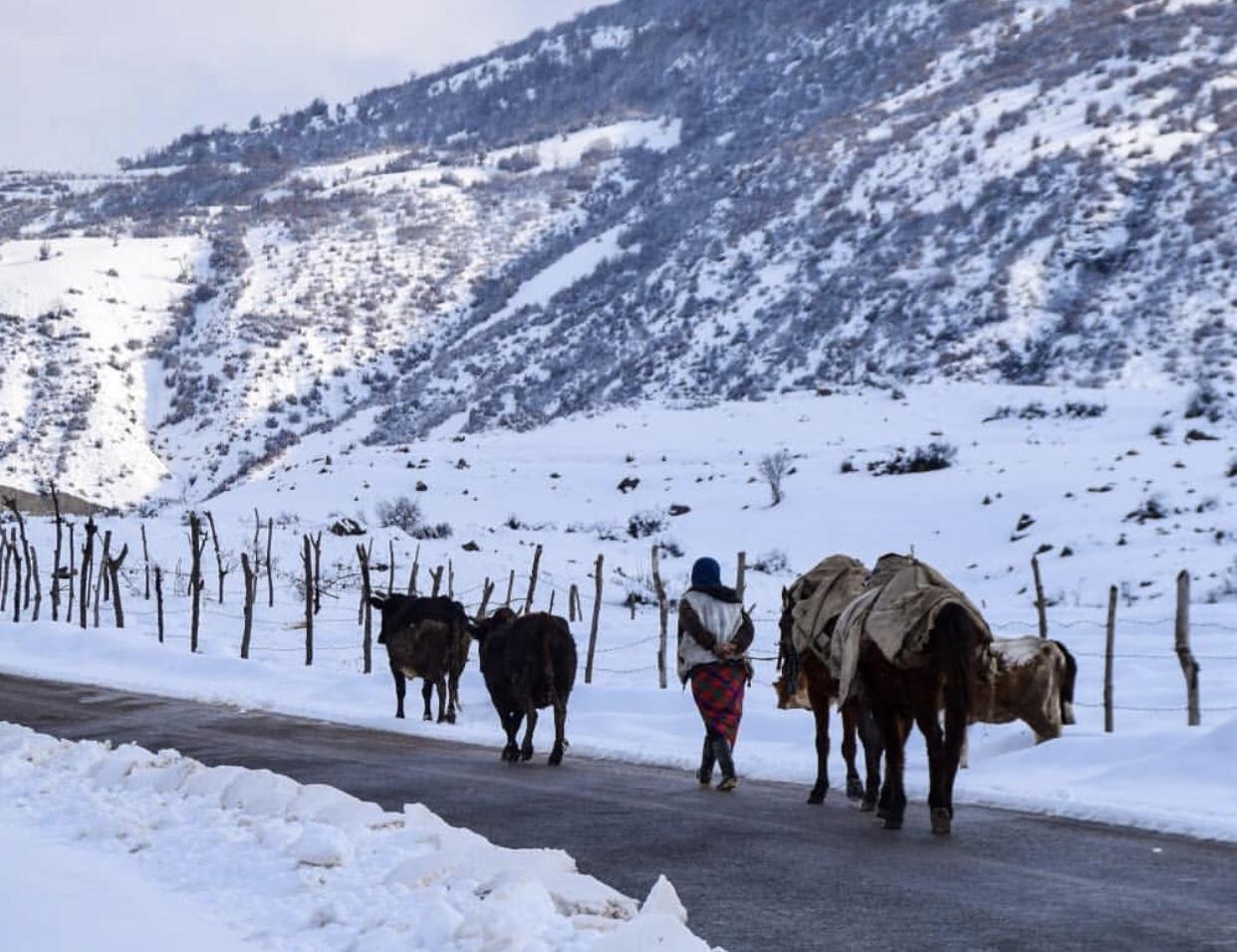 عدسة إيرانية: رعيٌ وسط الثلوج 1