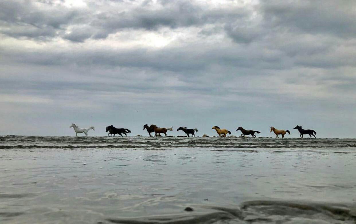 عدسة إيرانية: خيول على شاطئ نووي 1
