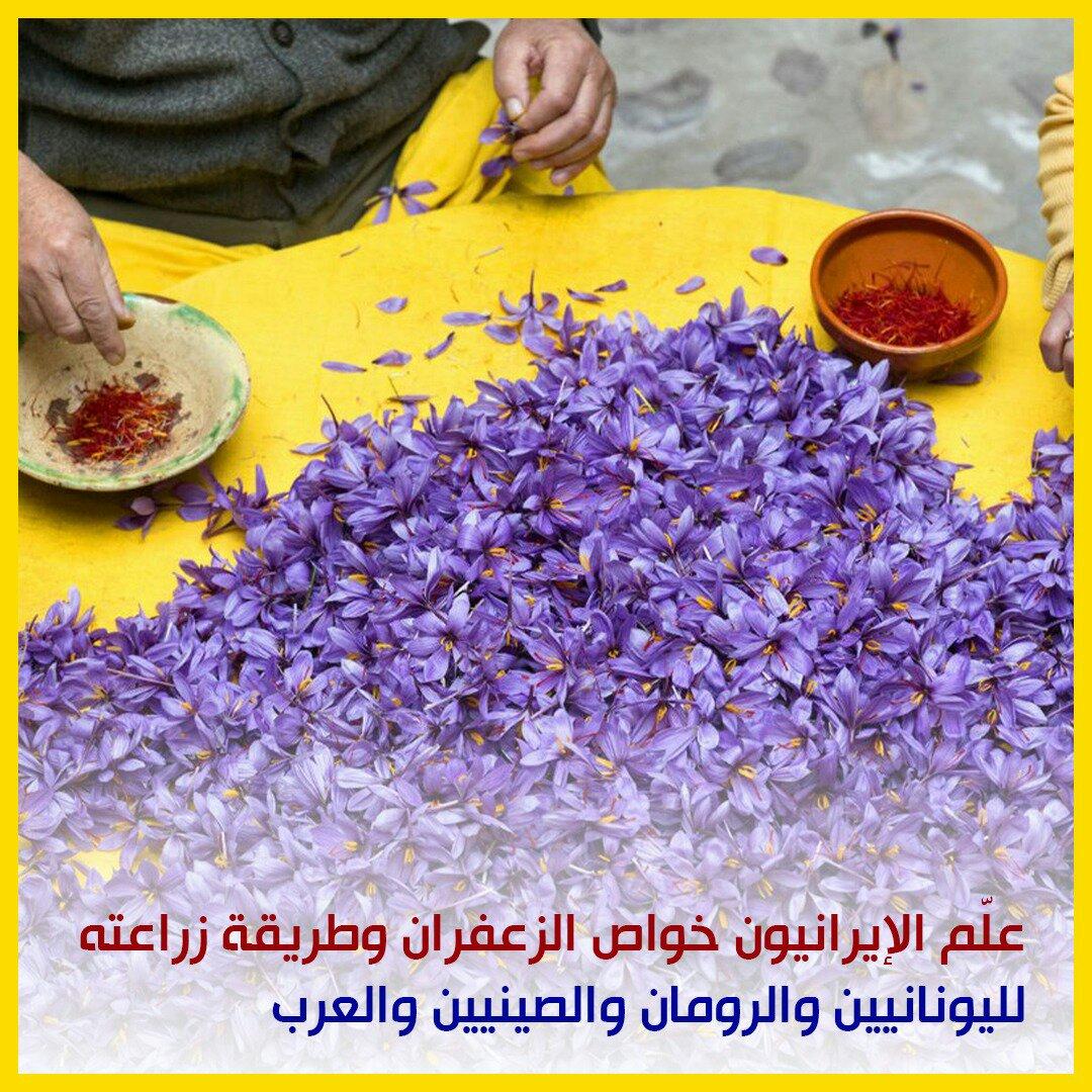 انفوغراف: الزعفران في إيران 4