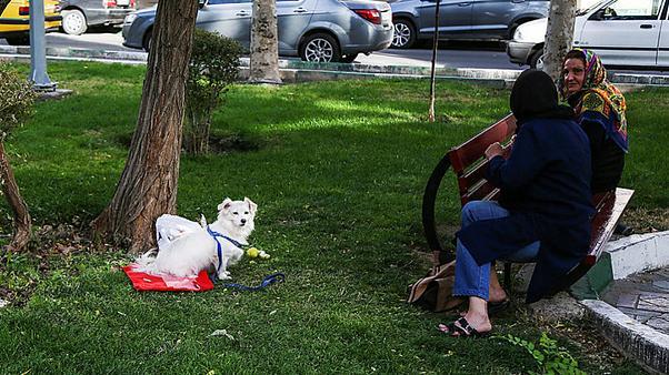 شباك الأحد: شرطة طهران تعزز دورها لمنع ظاهرتي خلع الحجاب ومرافقة الكلاب 1